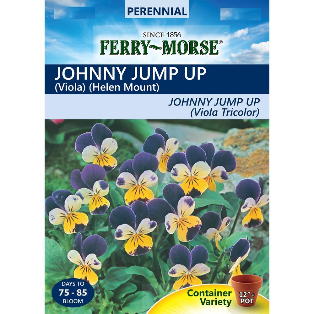 Johnny Jump Up Viola Helen Mount Seed