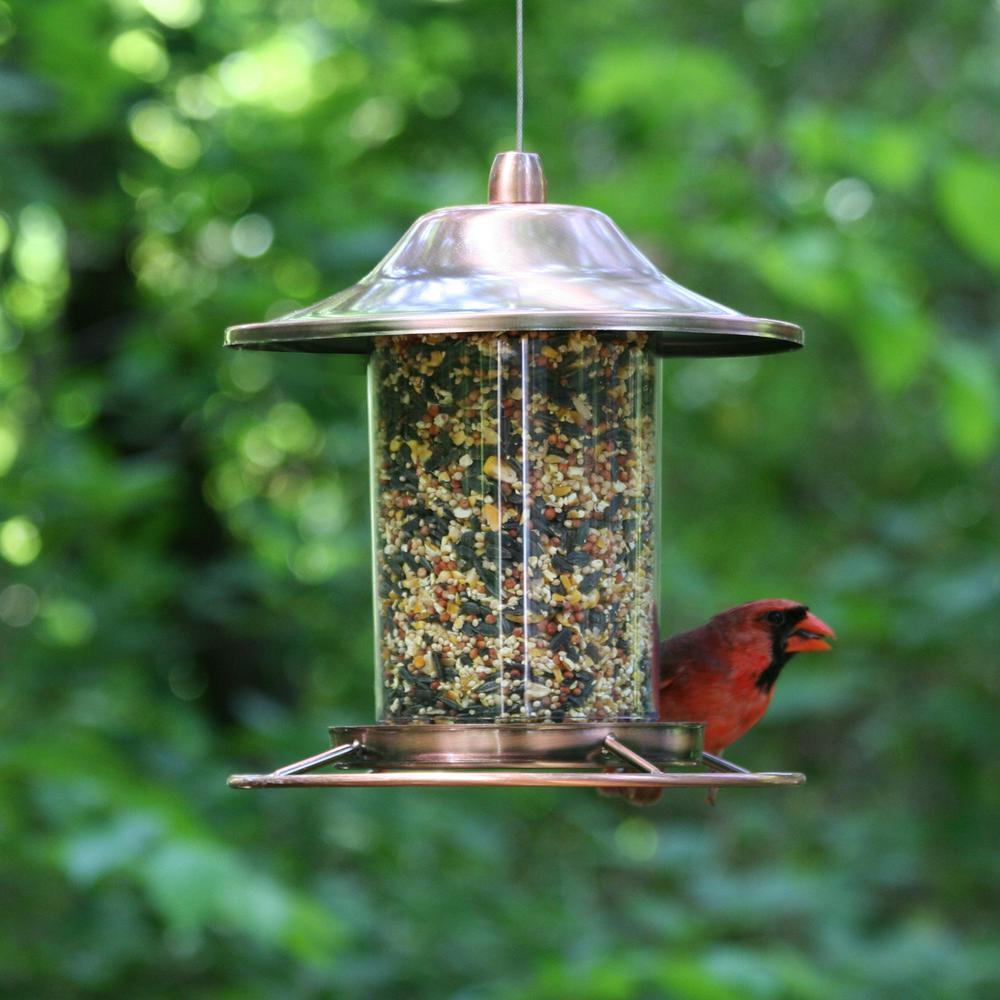 Copper Panorama Hanging Bird Feeder - 2 lb. Capacity