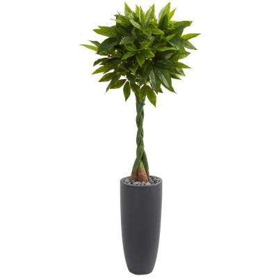 Real Touch 6 ft. High Indoor Money Artificial Tree in Gray Cylinder Planter