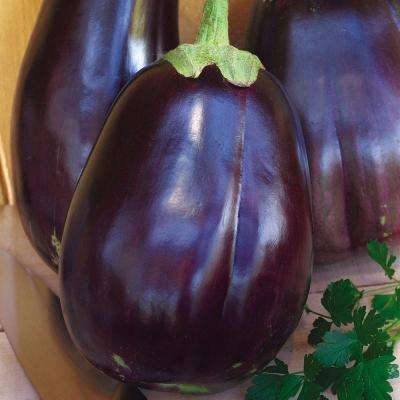 Egg plant Black Beauty Seeds Pack