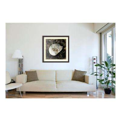 41.38 in. W x 41.38 in. H Marble Shell Series II by Edward Selkirk Framed Wall Art