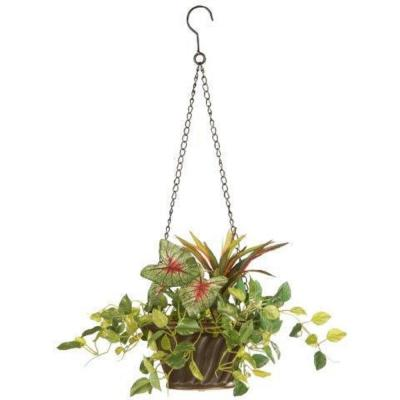 10 in. Assorted Greens Hanging Basket