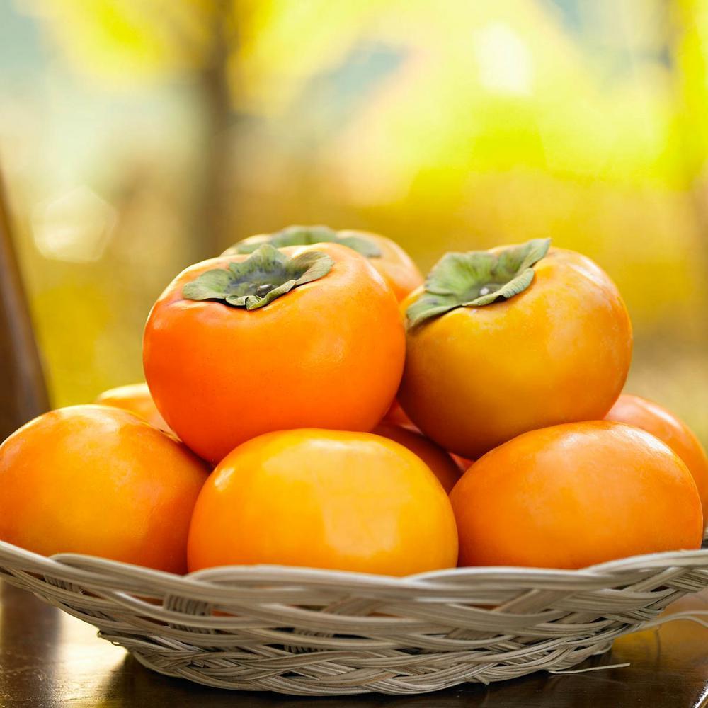 Izu Persimmon Diosyprios Live Bareroot Fruiting Tree (1-Pack)