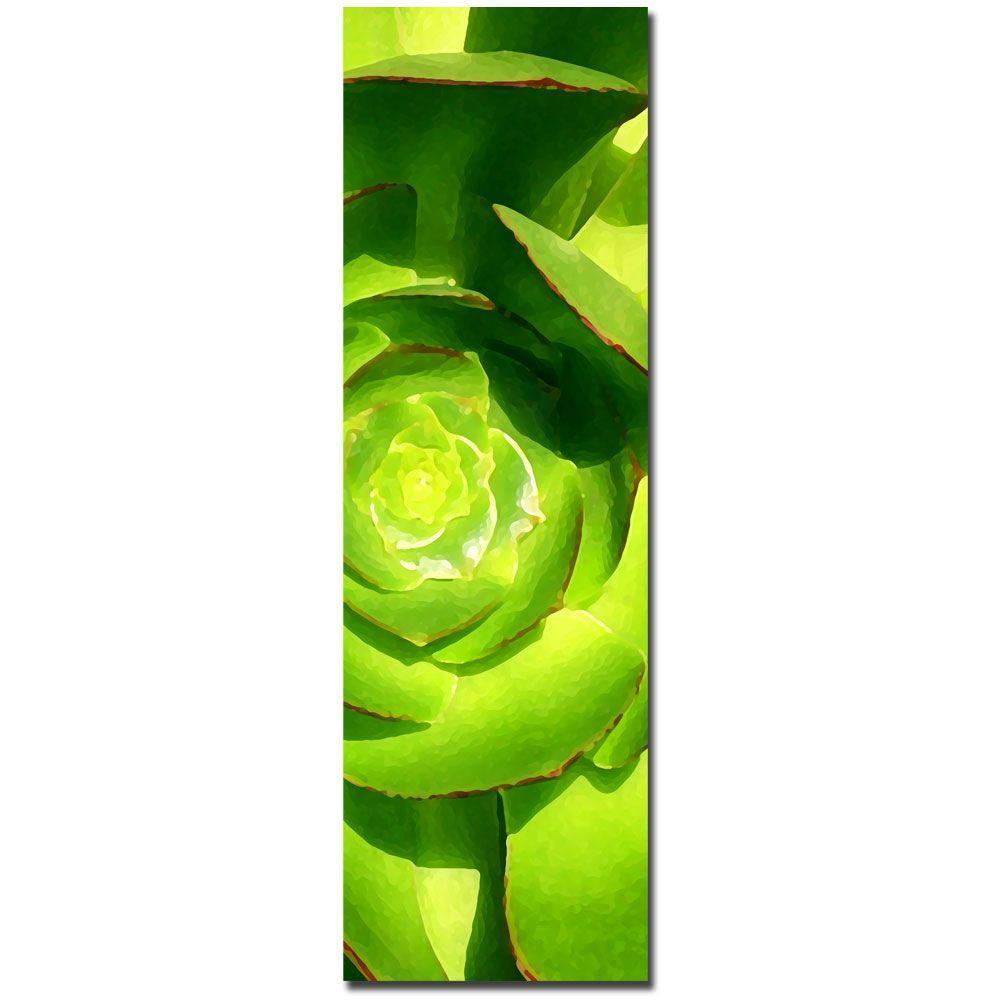 Trademark Fine Art 10 in. x 32 in. Succulent Square Canvas Art - Part C