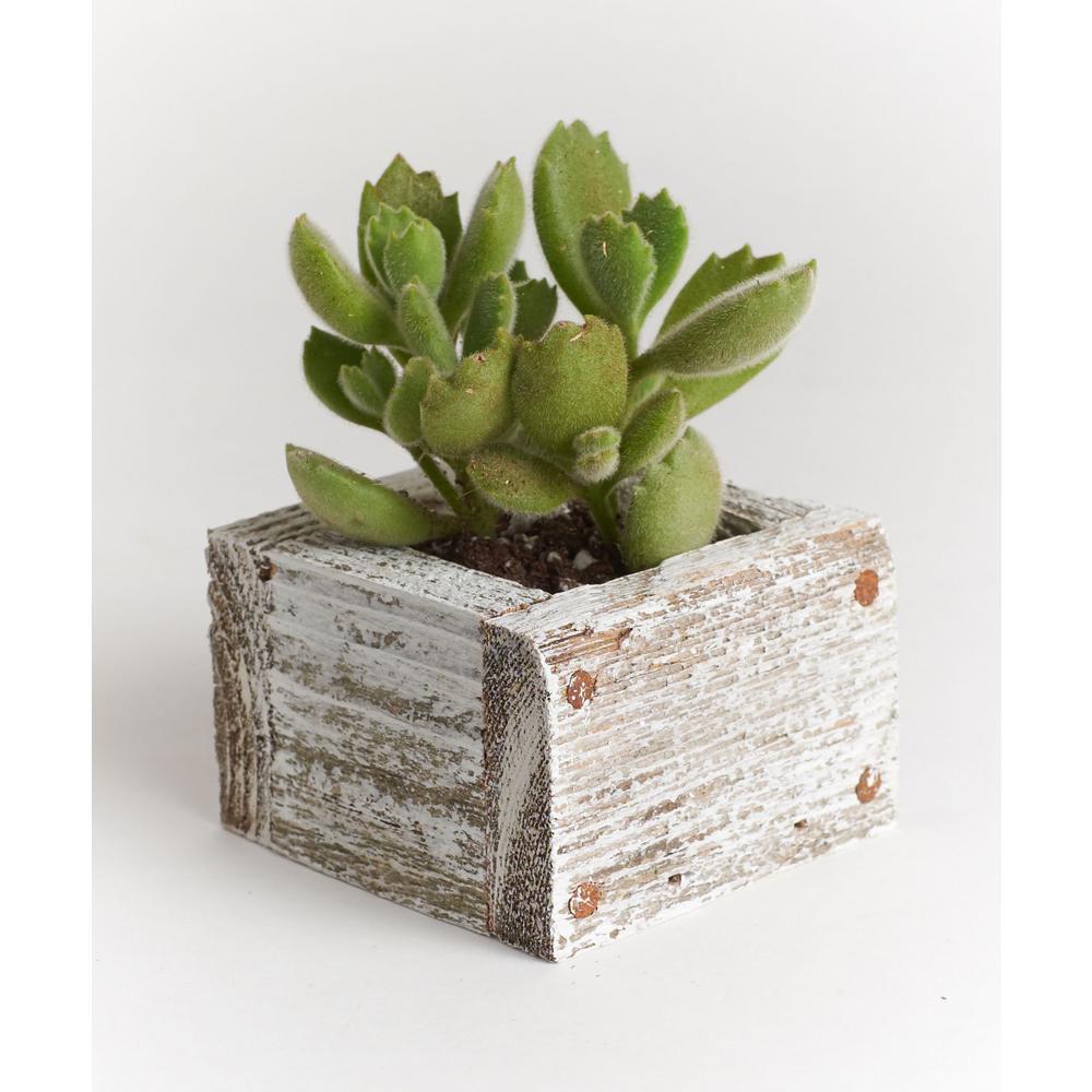 Wood Succulent Planter Comes Planted With Live Plants