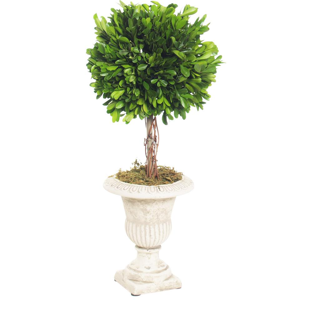 Boxwood Collection 18 in. Preserved Boxwood Single Ball Topiary in Urn