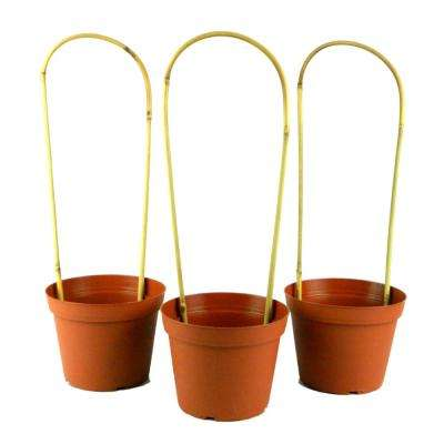 Small Transitional Terra Cotta Plant Pots Planters The