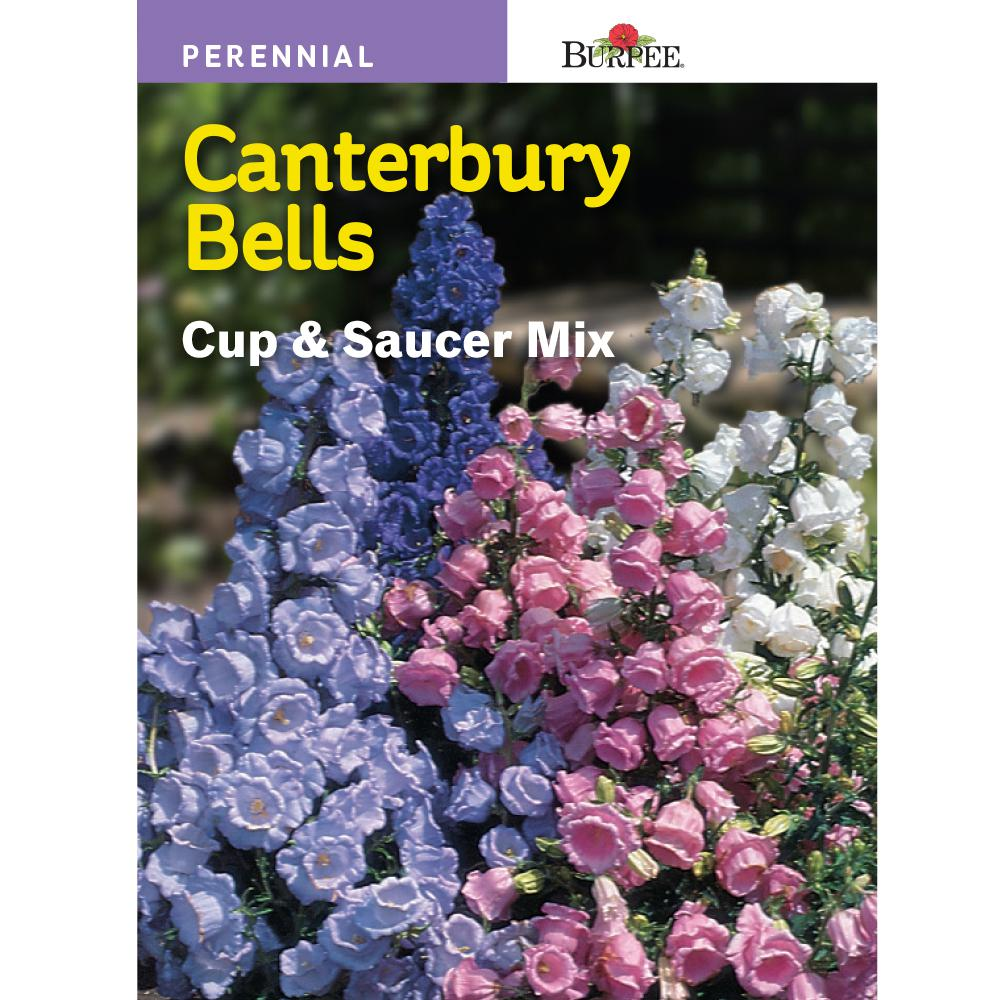 Burpee Canterbury Bells Cup And Saucer Mix Seed 43604 The Home Depot