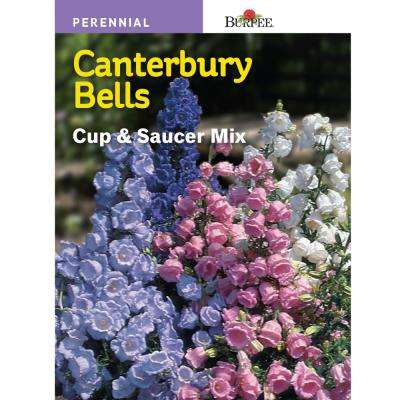 Canterbury Bells Cup-and-Saucer Mix Seed
