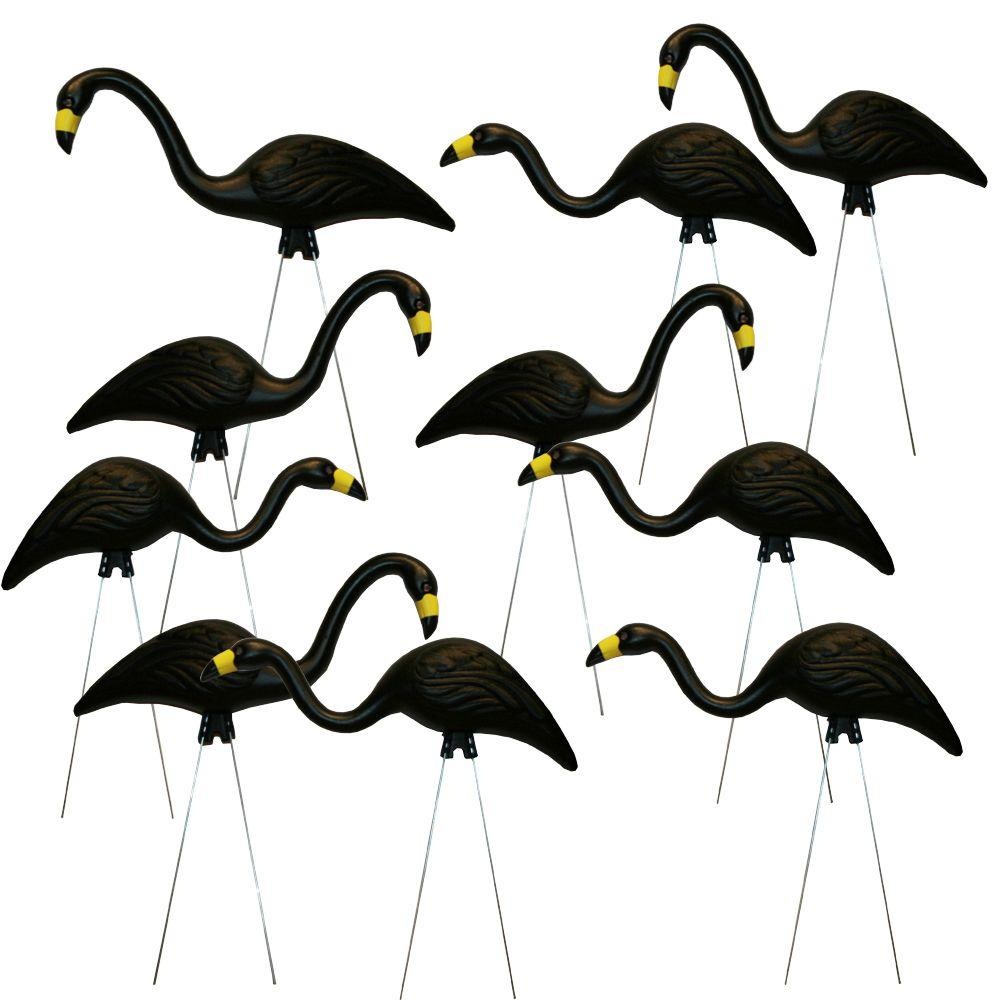 Black Flamingo 10 Pack