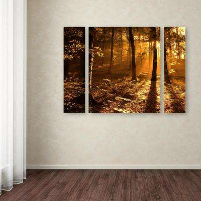 """30 in. x 41 in. """"Morning Light"""" by Philippe Sainte-Laudy Printed Canvas Wall Art"""