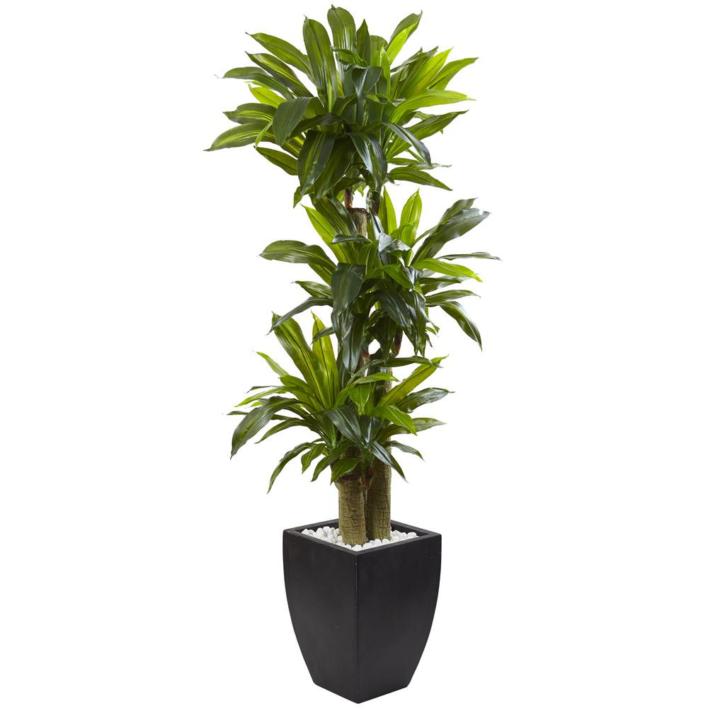 Nearly Natural Indoor Corn Stalk Dracaena With Black Wash
