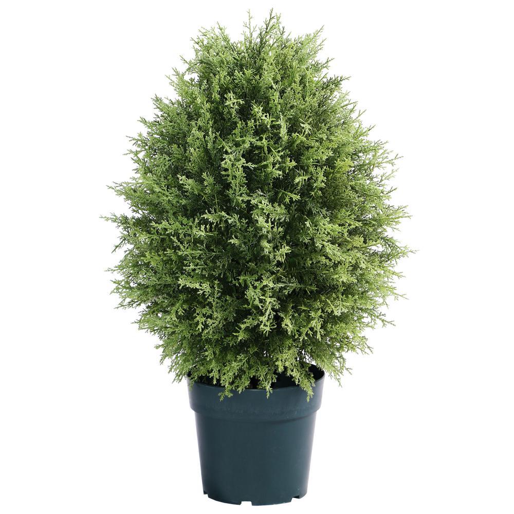 30 in. Cypress Tree