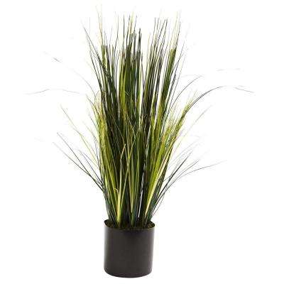 3 ft. Onion Grass Plant