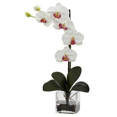 Giant Phalaenopsis Orchid with Vase Arrangement in White