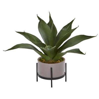 14 in. Indoor Agave Succulent in Decorative Planter