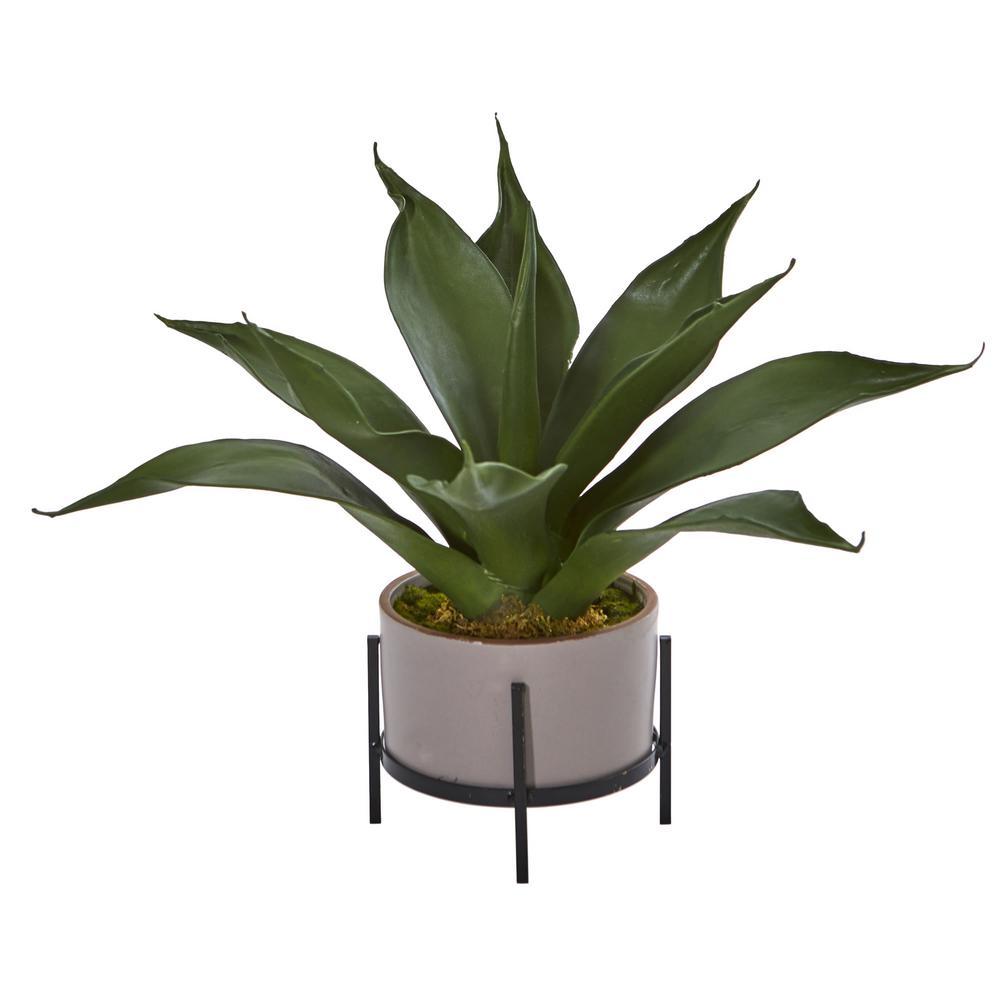 14 in. Indoor Agave Succulent in Decorative Planter