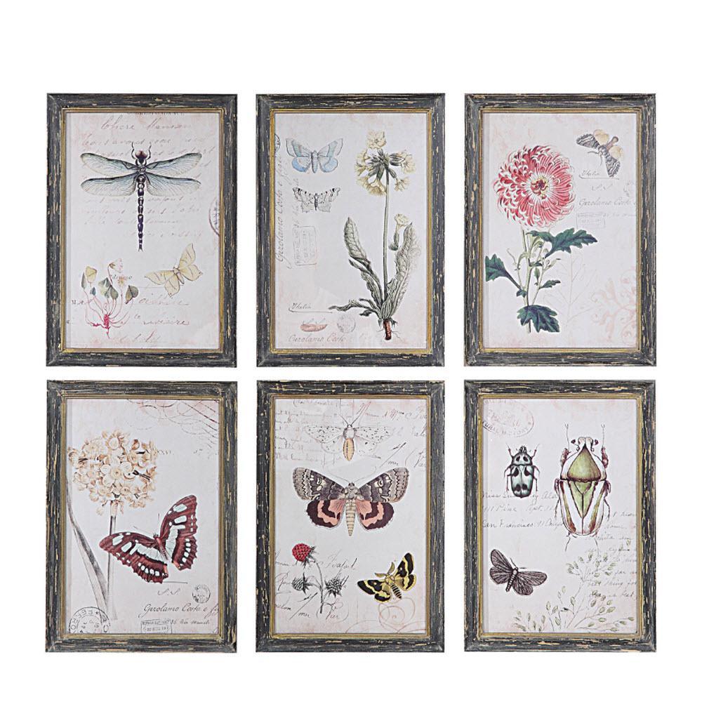 13 in. H x 9.5 in. W Herbarium Prints Framed Wall Art (Set of 6)