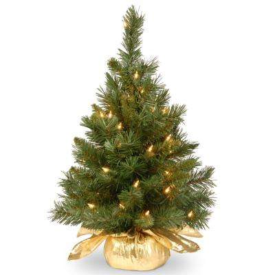 24 in. Majestic Fir Tree with Clear Lights