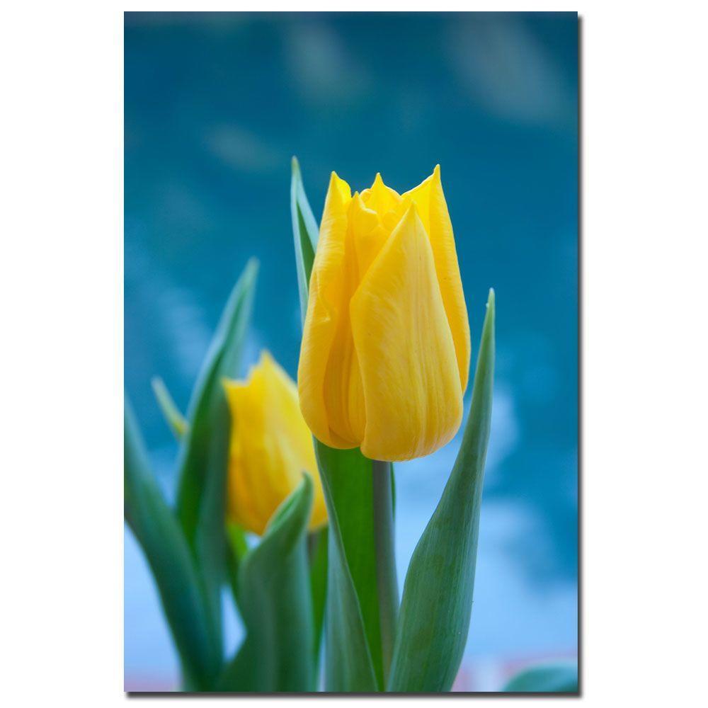 Trademark Fine Art 24 in. x 16 in. Yellow Tulips Canvas Art