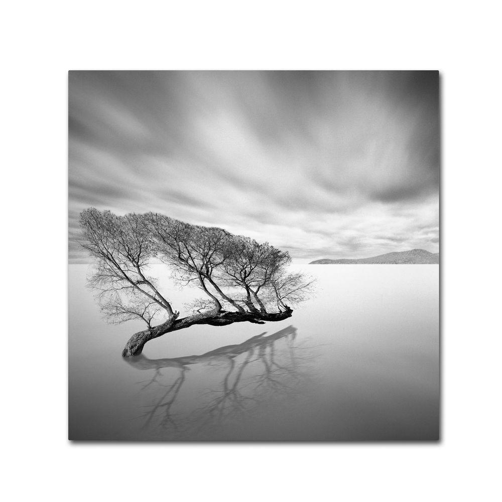 null 35 in. x 35 in. Water Tree VII Canvas Art