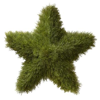 36 in. Juniper Topiary Star