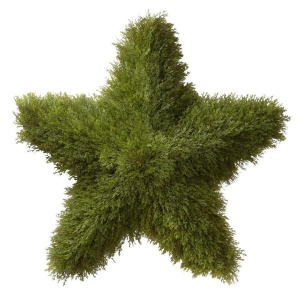 36 in. Juniper Topiary Star