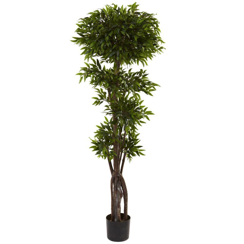 5 ft. Ruscus Tree