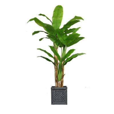 78 in. Tall Banana Tree with Real Touch Leaves in Planter