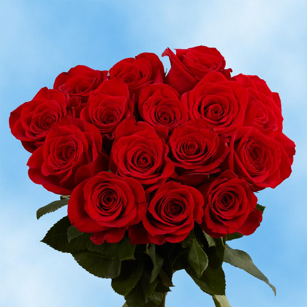 Globalrose Fresh Red Roses for Valentine\'s Day (100 Stems)-100-red ...