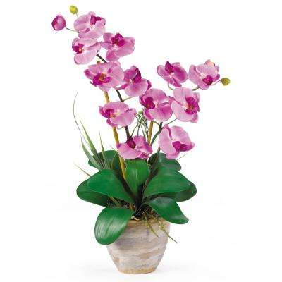 25 in. Double Phalaenopsis Silk Orchid Flower Arrangement in Mauve