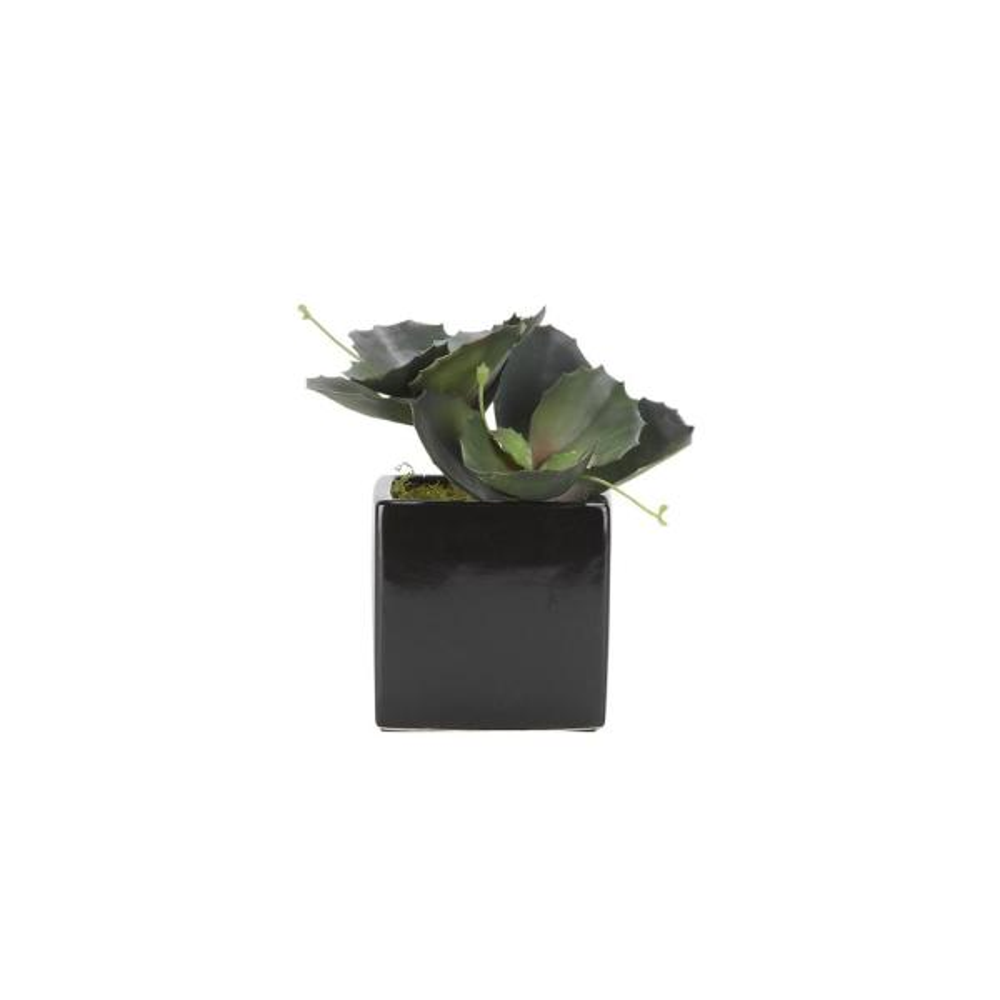 D&W Silks Indoor Wild Succulents in Square Black Ceramic 175126