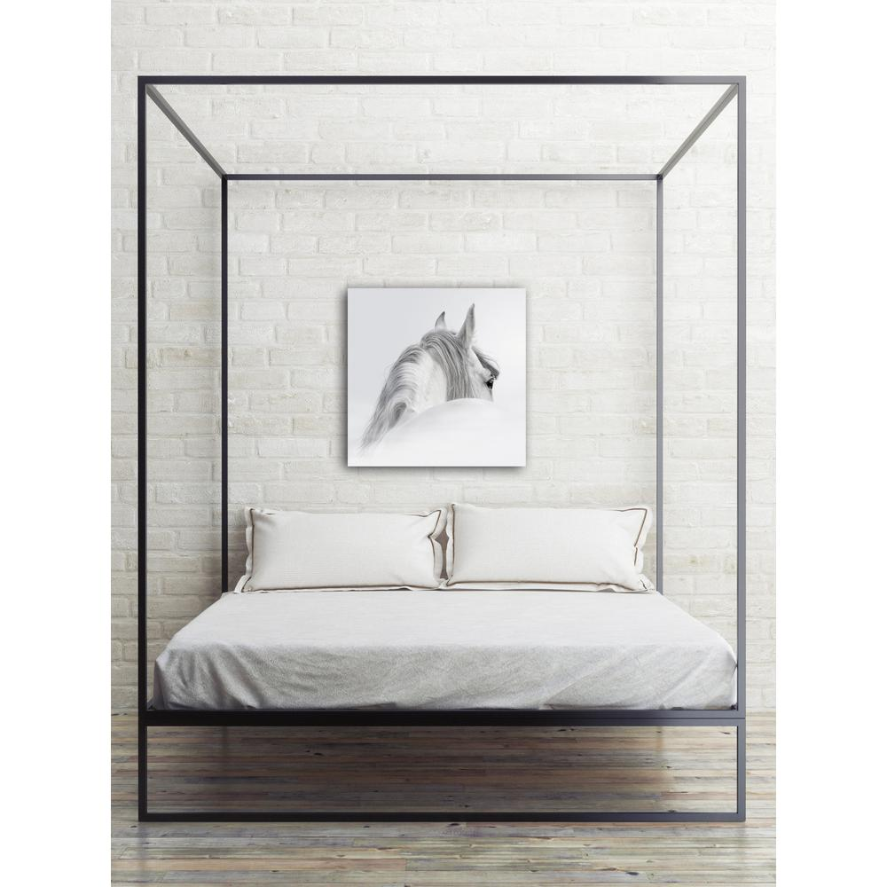 "32 in. x 32 in. ""Equine Beauty"" Photography HiDef Glass Wall"