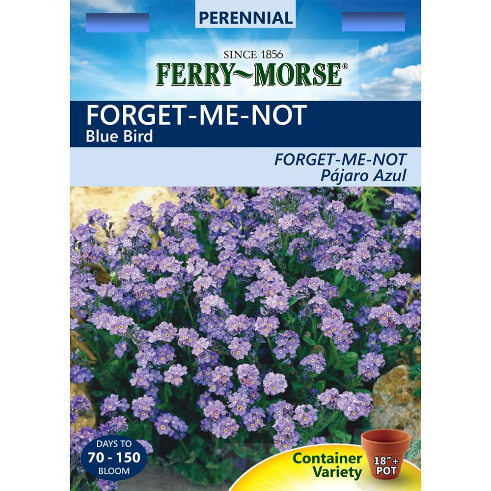 ferry morse forget me not blue bird seed 2020 the home depot. Black Bedroom Furniture Sets. Home Design Ideas