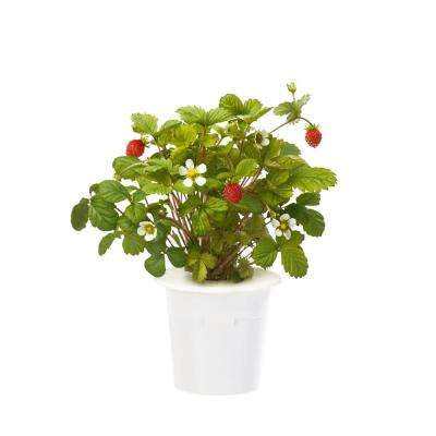 Wild Strawberry Refill for Smart Herb Garden (3-Pack)