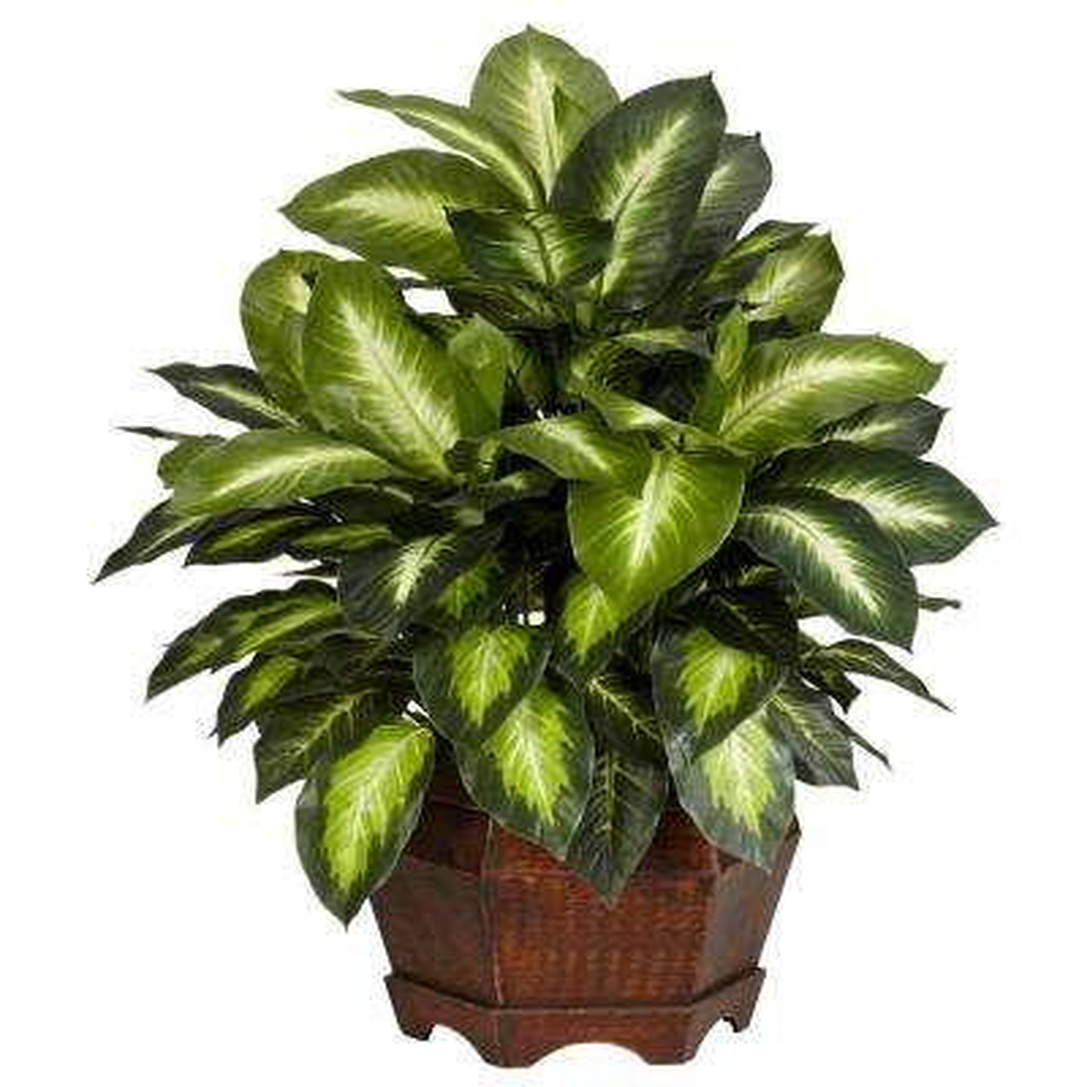 24 in. H Green Golden Dieffenbachia Silk Plant