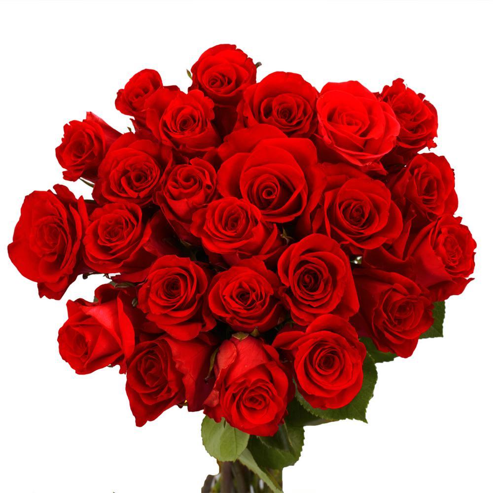 Fresh Red Valentine´s Day Roses (50 Stems)