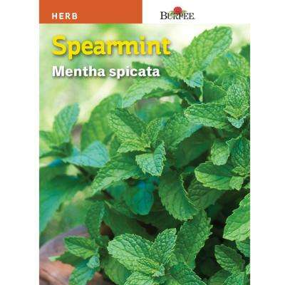 Spearmint Herb Seed