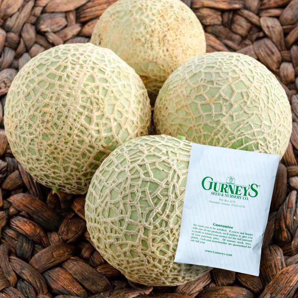 Melon Sugar Cube Hybrid (10 Seed Packet)