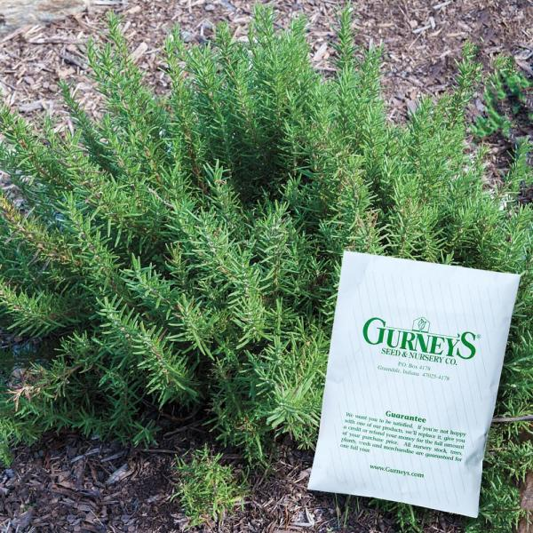 Herb Rosemary (100 Seed Packet)