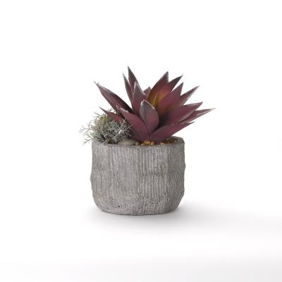 Indoor Red Frosted Aloe in Cement Bowl