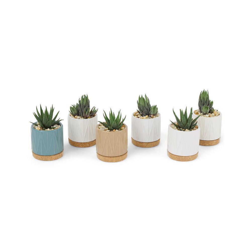 3 in. Succulent in Ceramic (6-Plants)