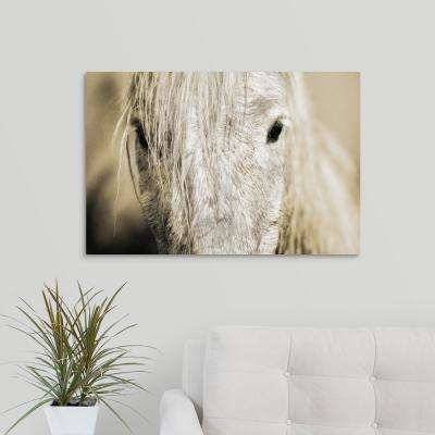 "30 in. x 20 in. ""Close up of a Camargue horse, Arles, France"" by  Scott Stulberg Canvas Wall Art"