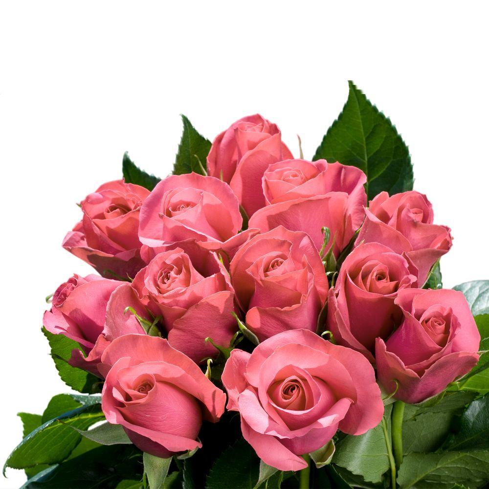Fresh Pink Roses Bridal (250 Stems)