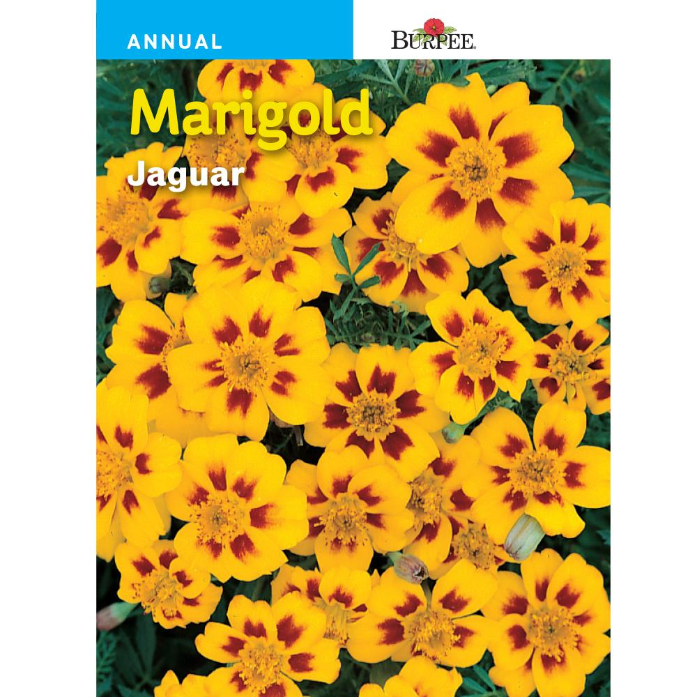 Burpee French Jaguar Marigold Flower Seed 33227 The Home Depot