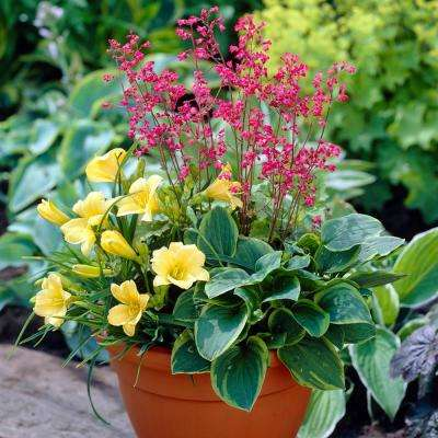 Assorted Colors Perennial Patio Container Collection Roots (3-Pack)