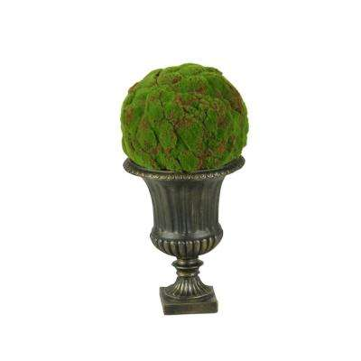 Indoor Large Moss Ball in Urn