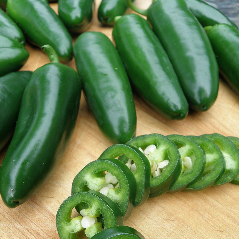 Bonnie Plants 4.5 in. 19.3 oz. Pepper-Mammoth Jalapeno