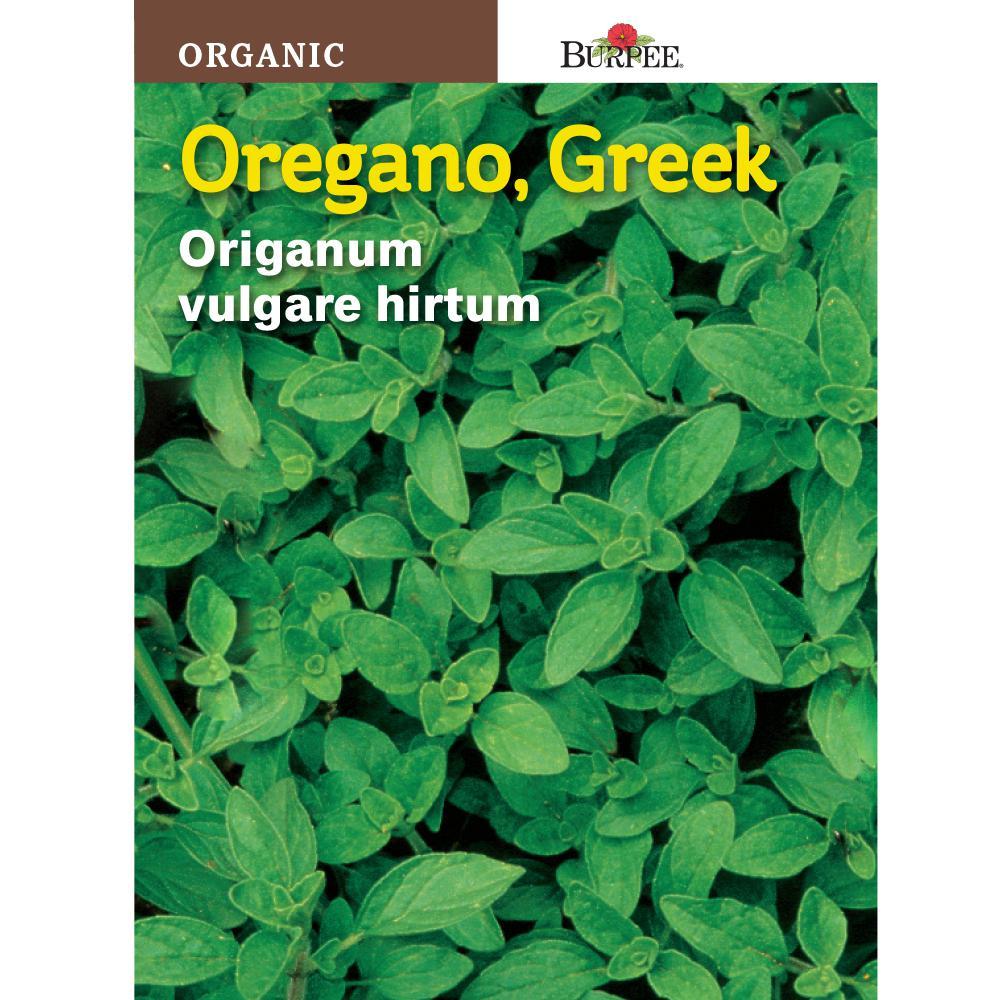 Herb Oregano Greek Organic Seed