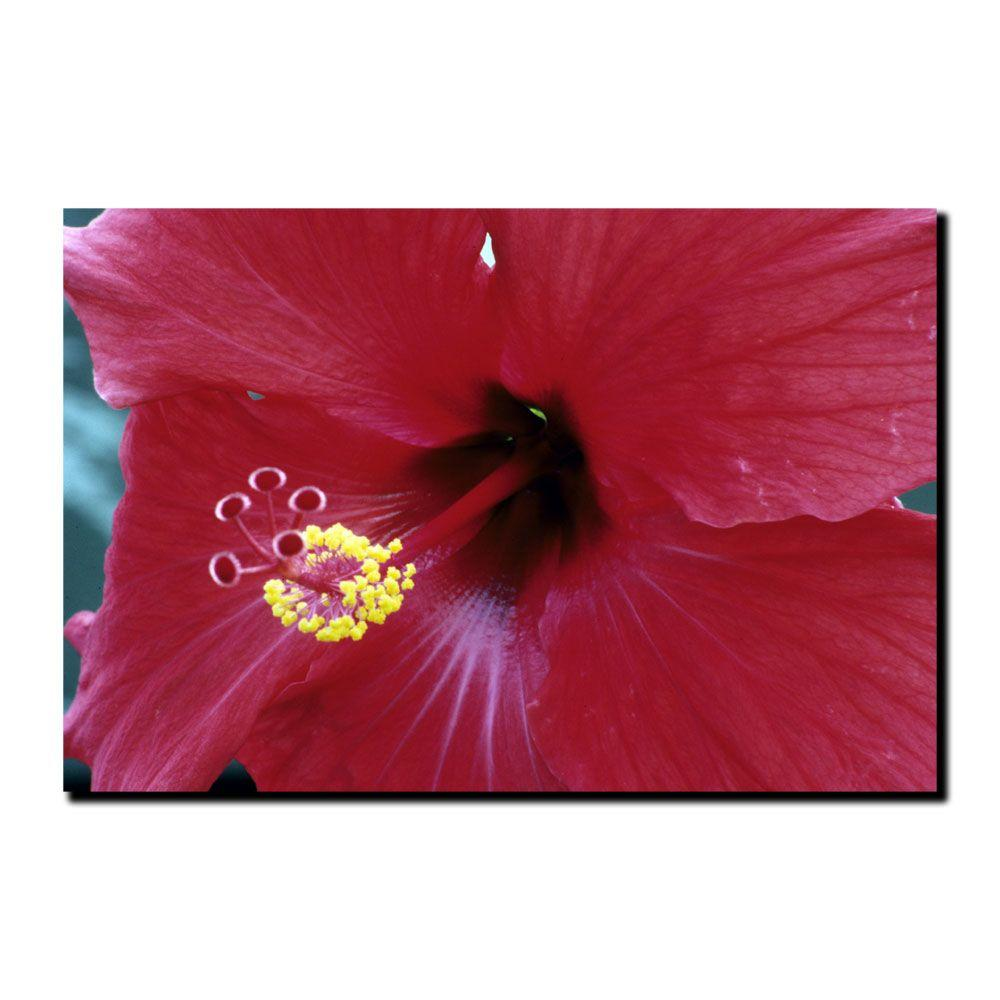 Trademark Fine Art 24 in. x 32 in. Into the Hibiscus Canvas Art